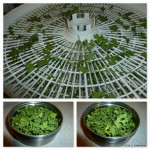 How to Dehydrate Cilantro