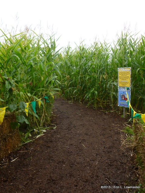 The Beginning of the Maize