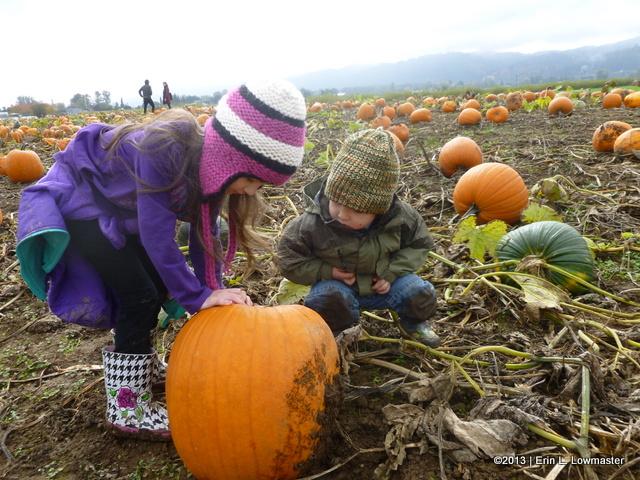 Investigating the Pumpkins