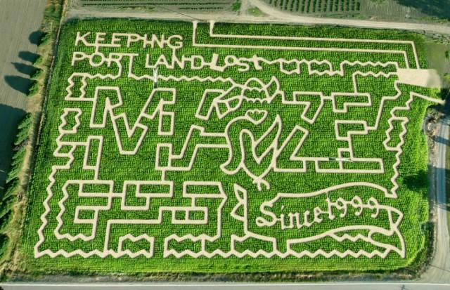 portland-original-corn-maze-2013-e1380753554534