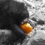 Howloween at the Oregon Zoo! {Family Fun Event Recap!}