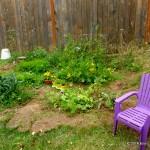 My Summer Garden …