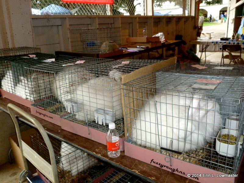 Angora Bunnies