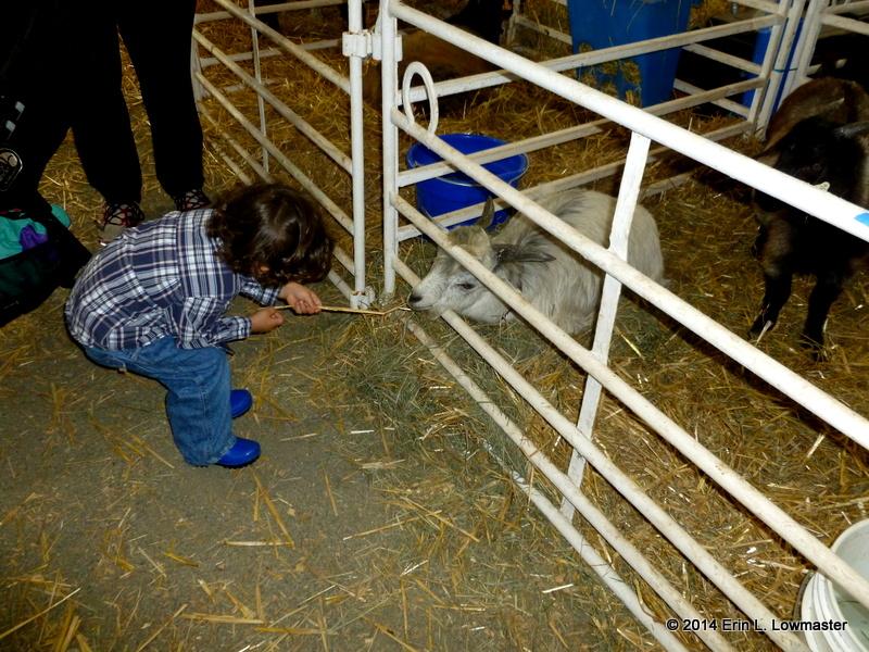 Owen feeding the animals hay