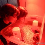 Wordless Wednesday: Our Baby Chickens!