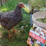 A Kid's Guide to Keeping Chickens {Book Review}