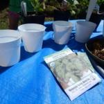 Panda Pots™ Reusable Plant Cups {Review}